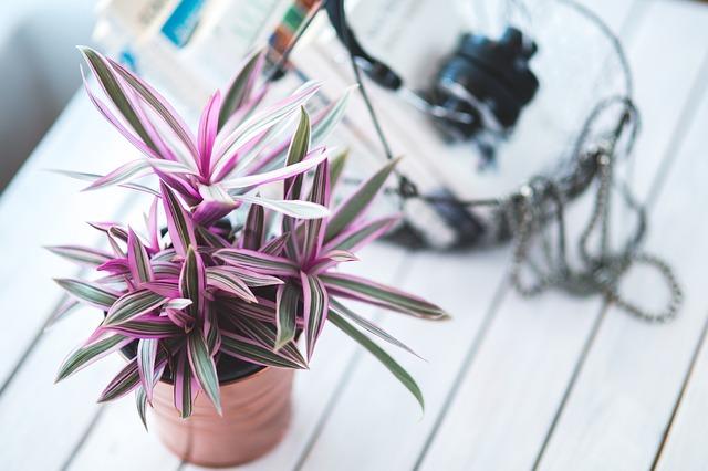 初心者さんにおすすめの観葉植物6種と育て方の4つのポイントを紹介