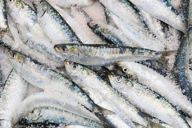 【初心者向け】サビキ釣りの始め方!釣り方や道具を解説
