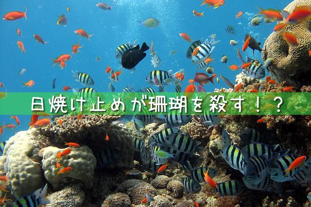 日焼け止めクリームが珊瑚を殺す?人と珊瑚に優しい日焼け止めとは