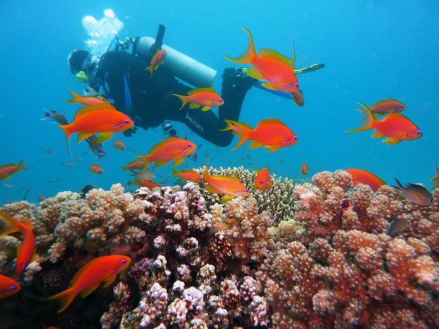 ダイバーと珊瑚の海