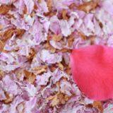 桜の花のドライフラワー