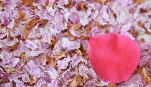 桜のドライフラワーの作り方|シリカゲルを使う方法や保管方法を紹介