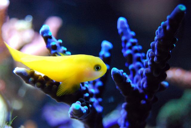 美しい珊瑚とハゼ
