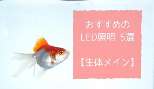 生体メインの水槽で使うLED照明のおすすめ5選|コスパ重視で選ぼう!