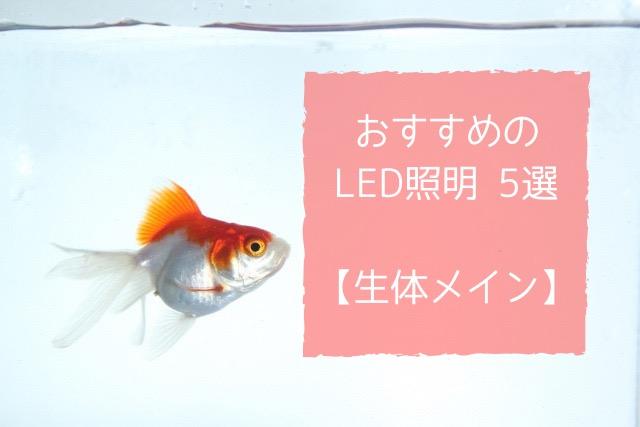 生体メイン おすすめ LED照明