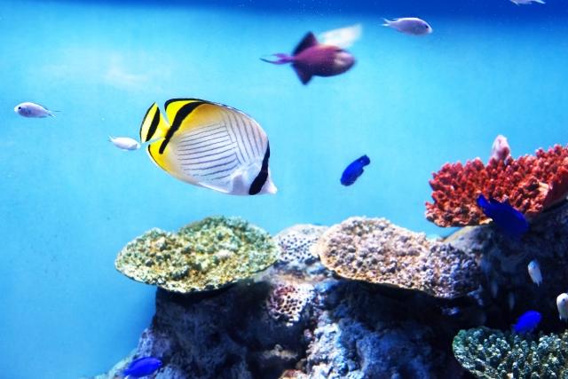 アクリル水槽 海水魚 飼育
