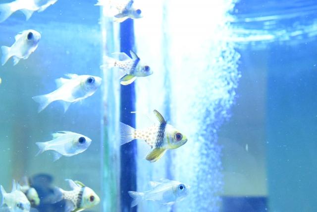 熱帯魚とエアレーション