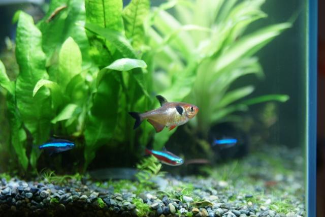水槽と熱帯魚