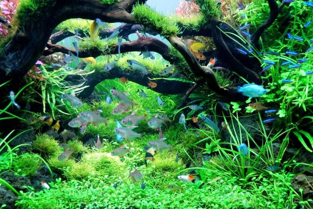熱帯魚と水草の水槽