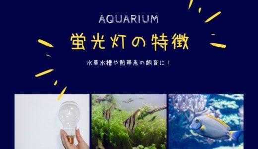 蛍光灯の特徴|水草水槽や熱帯魚飼育にぴったりの照明【アクアリウム】