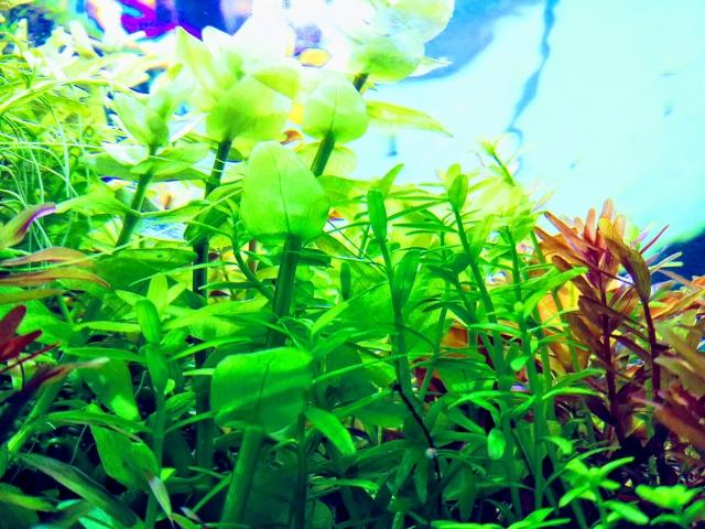照明に照らされる水草