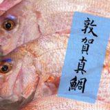 敦賀真鯛とは?敦賀湾で育てられた新名物。引き締まった身が絶品!