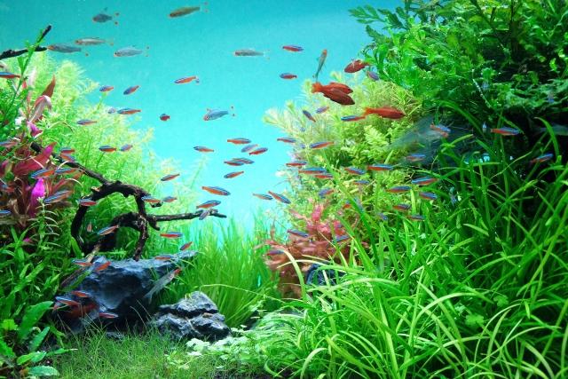 青背景の水草水槽