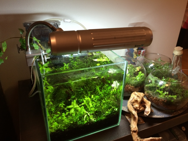 ソイルを使った水草水槽