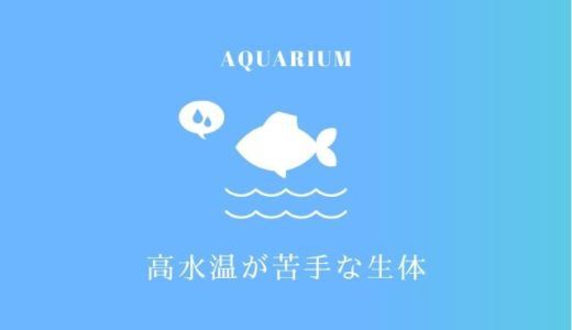 高水温が苦手な生体とは|熱帯魚や金魚、メダカの適正な水温って?
