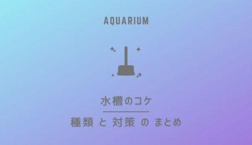 水槽に発生するコケの種類と対策のまとめ|アクアリウムのメンテナンス