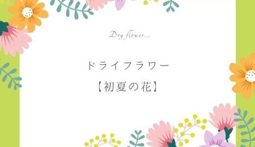 初夏のドライフラワー作りにおすすめの花7選|人気のお花を楽しもう