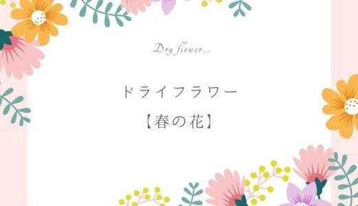 春のドライフラワー作りにおすすめの花8選|淡い色合いの花を楽しもう