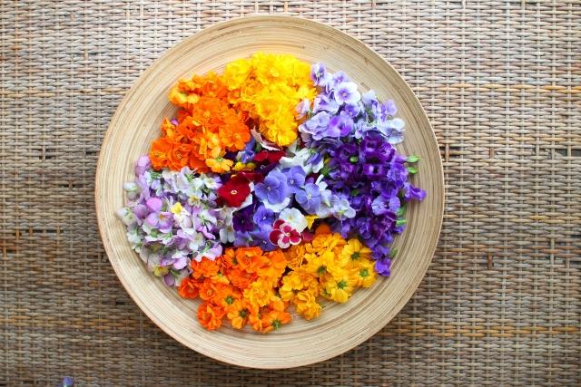 カラフルな花たち